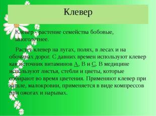 Клевер Клевер - растение семейства бобовые, многолетнее. Растет клевер на луг