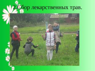 2.Сбор лекарственных трав.