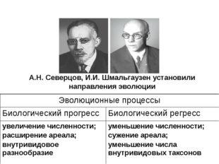 А.Н. Северцов, И.И. Шмальгаузен установили направления эволюции Эволюционные