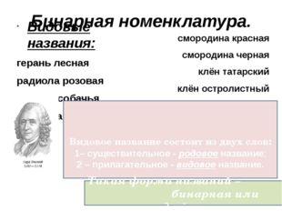Бинарная номенклатура. Видовые названия: герань лесная радиола розовая фиалка