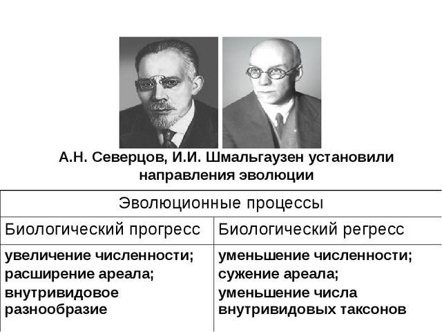 А.Н. Северцов, И.И. Шмальгаузен установили направления эволюции Эволюционные...