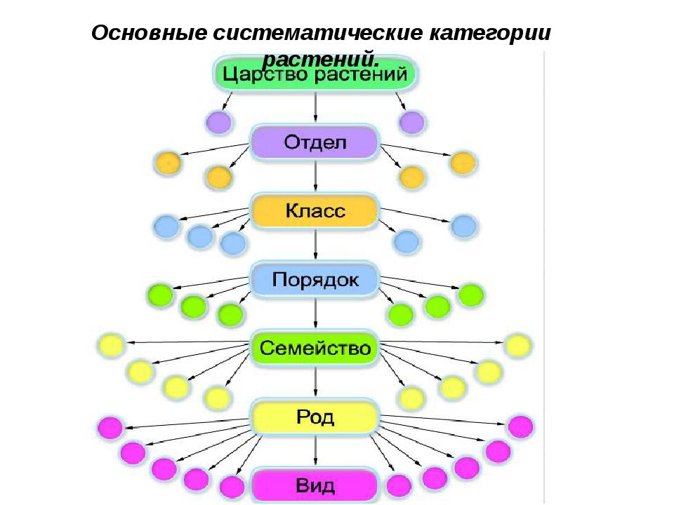 Основные систематические категории растений.