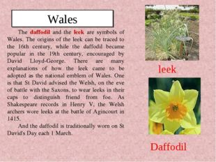 The daffodil and the leek are symbols of Wales. The origins of the leek can b
