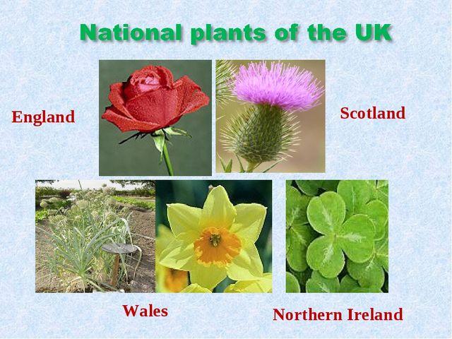 England Scotland Wales Northern Ireland