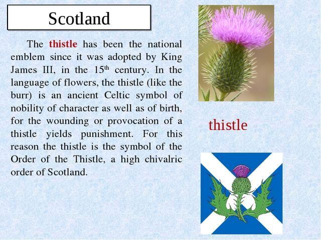 The thistle has been the national emblem since it was adopted by King James I...