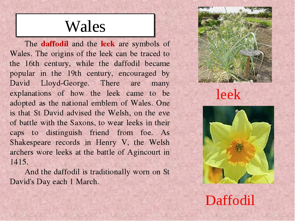 The daffodil and the leek are symbols of Wales. The origins of the leek can b...