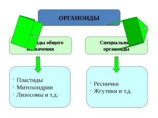 ОРГАНОИДЫ Органоиды общего назначения Специальные органоиды Пластиды Митохонд