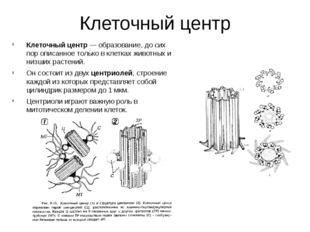 Клеточный центр Клеточный центр— образование, до сих пор описанное только в