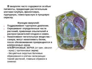 В вакуолях часто содержатся особые пигменты, придающие растительным клеткам