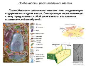 Плазмодесмы — цитоплазматические тяжи, соединяющие содержимое соседних клеток