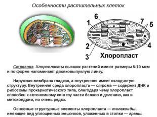 Строение. Хлоропласты высших растений имеют размеры 5-10 мкм и по форме напом