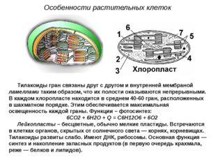 Тилакоиды гран связаны друг с другом и внутренней мембраной ламеллами таким о