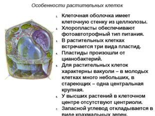 Клеточная оболочка имеет клеточную стенку из целлюлозы. Хлоропласты обеспечив