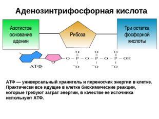 Аденозинтрифосфорная кислота АТФ АТФ — универсальный хранитель и переносчик э
