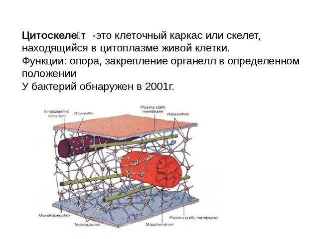 Цитоскеле́т -это клеточный каркас или скелет, находящийся вцитоплазмеживой...
