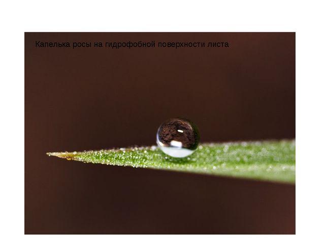 Капелькаросына гидрофобной поверхностилиста