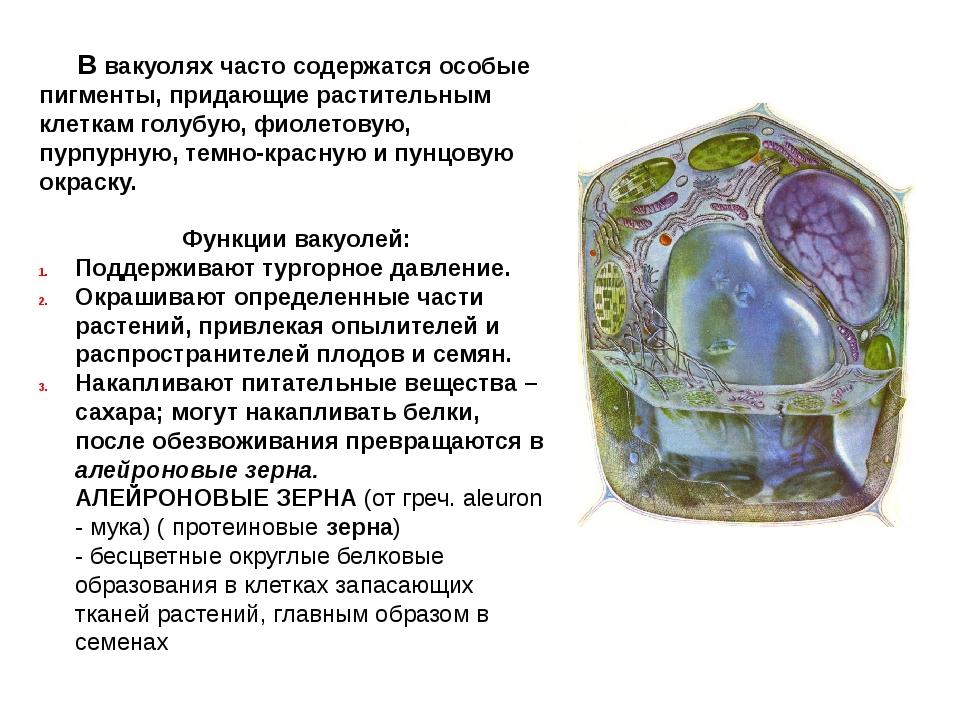 В вакуолях часто содержатся особые пигменты, придающие растительным клеткам...