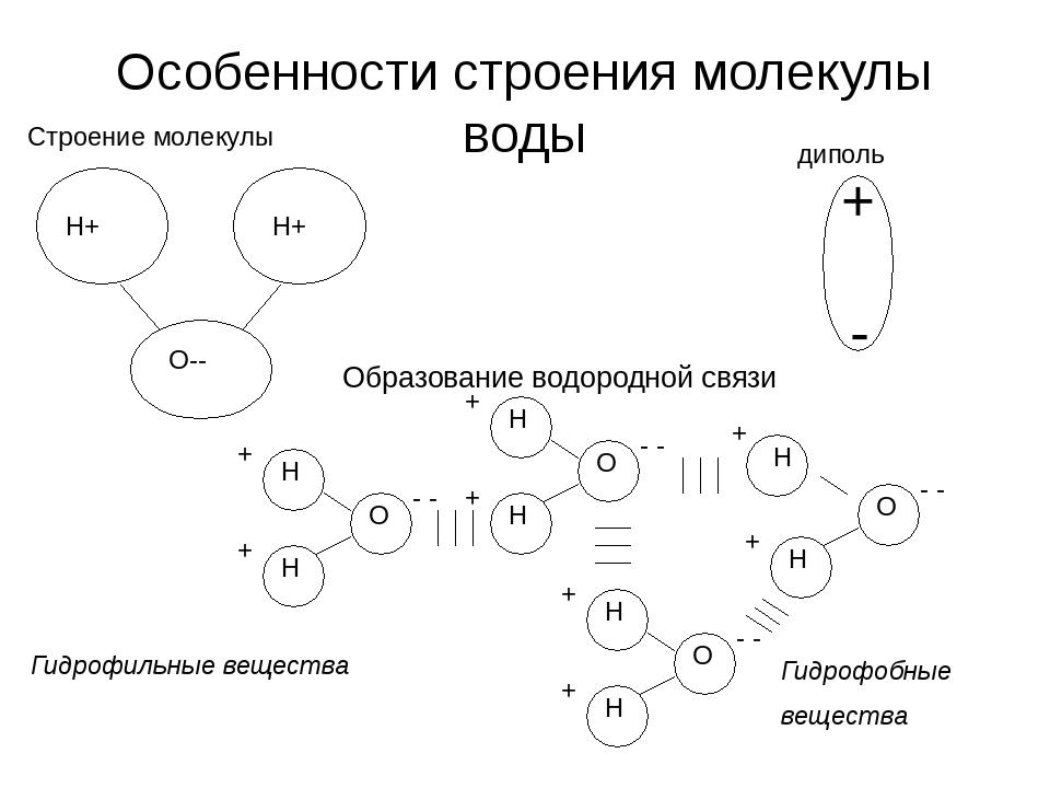 Особенности строения молекулы воды Гидрофильные вещества Гидрофобные вещества...