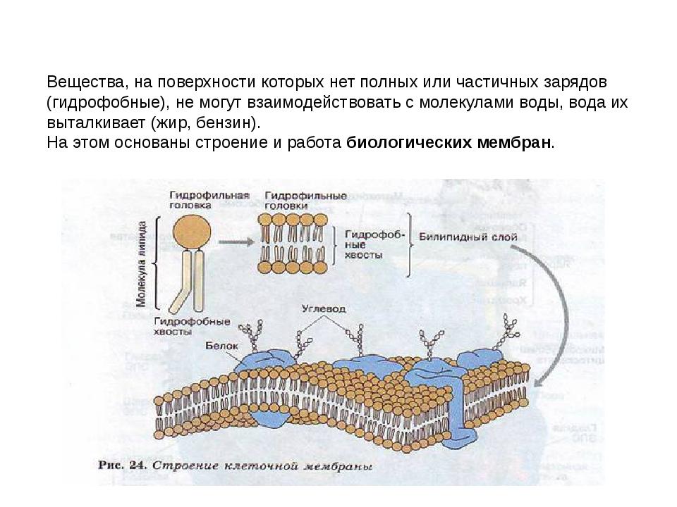 Вещества, на поверхности которых нет полных или частичных зарядов (гидрофобны...