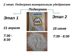 2 этап. Подкормка минеральным удобрением 21 апреля 7:30 - 8:30 15 июня 7:30 -