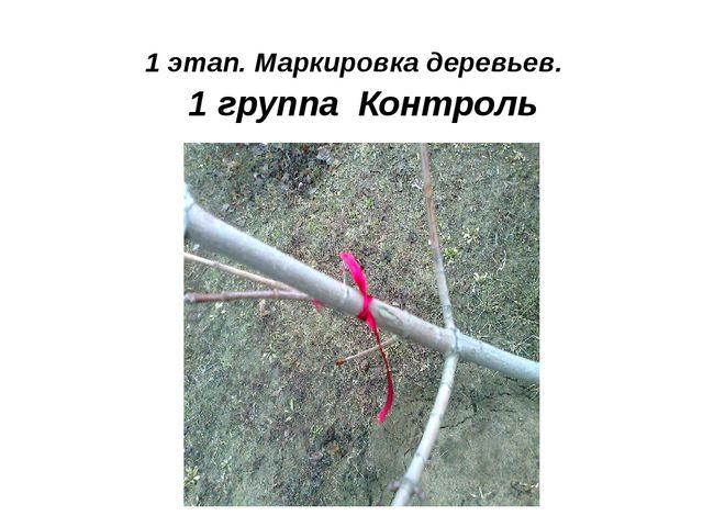 1 группа Контроль 1 этап. Маркировка деревьев.
