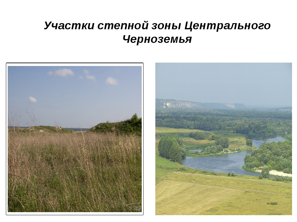 Участки степной зоны Центрального Черноземья