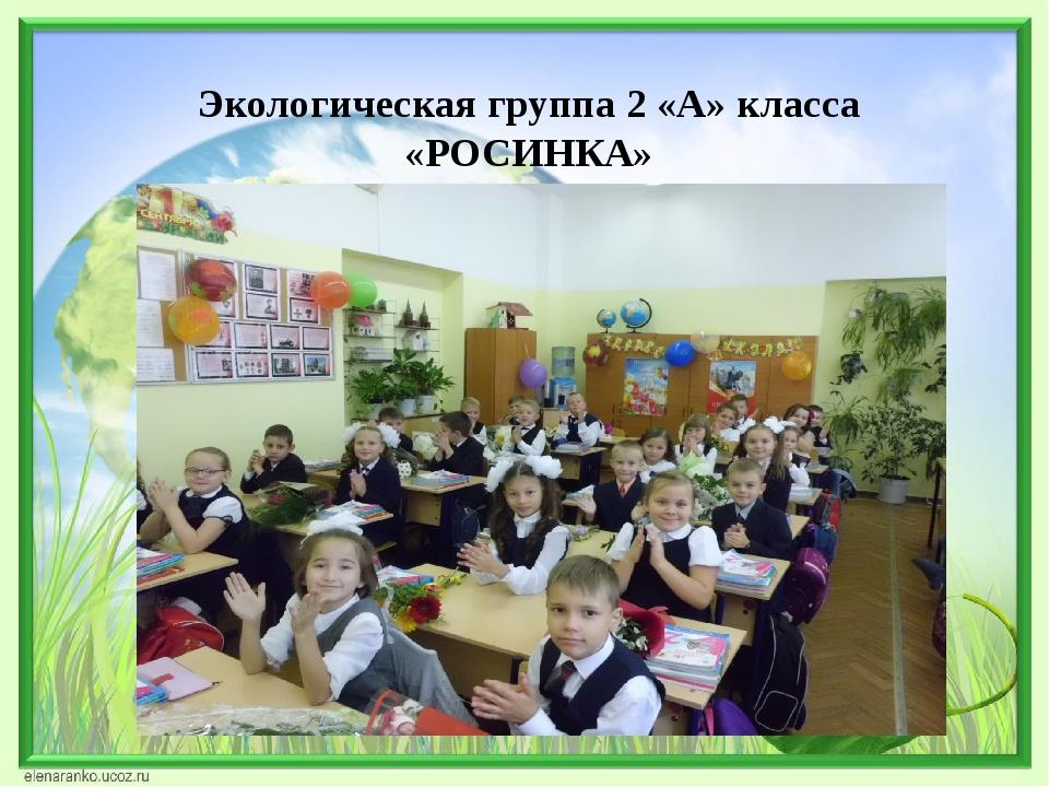 Экологическая группа 2 «А» класса «РОСИНКА»