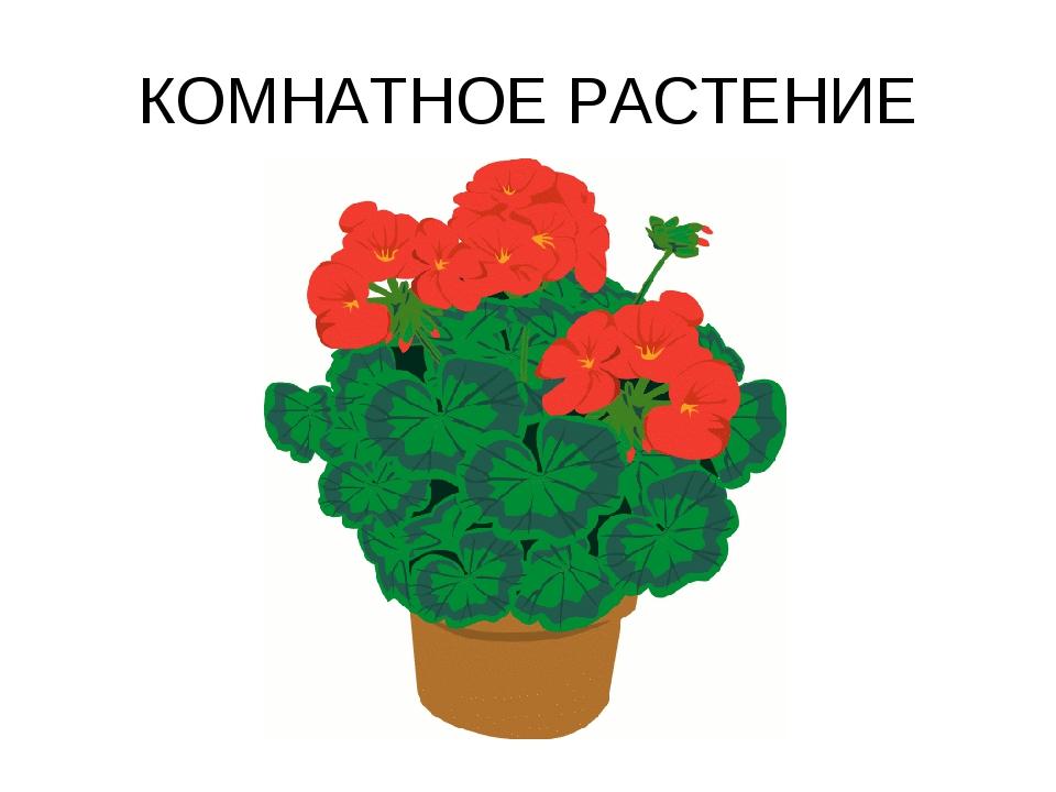 Комнатные цветы картинки для детей, ржачные гифки добрым