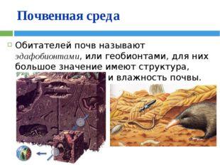 Почвенная среда Обитателей почв называют эдафобионтами, или геобионтами, для