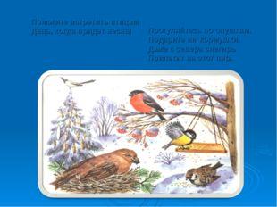 Помогите встретить птицам День, когда придет весна! Прогуляйтесь по опушкам.