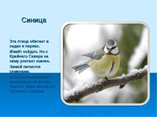 Синица Эта птица обитает в садах и парках. Живёт осёдло. Но с Крайнего Севера