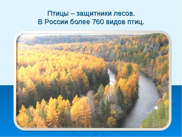 Птицы – защитники лесов. В России более 760 видов птиц.