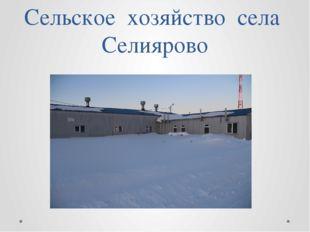 Сельское хозяйство села Селиярово