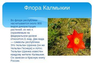 Флора Калмыкии Во флоре республики насчитывается около 900 видов дикорастущих