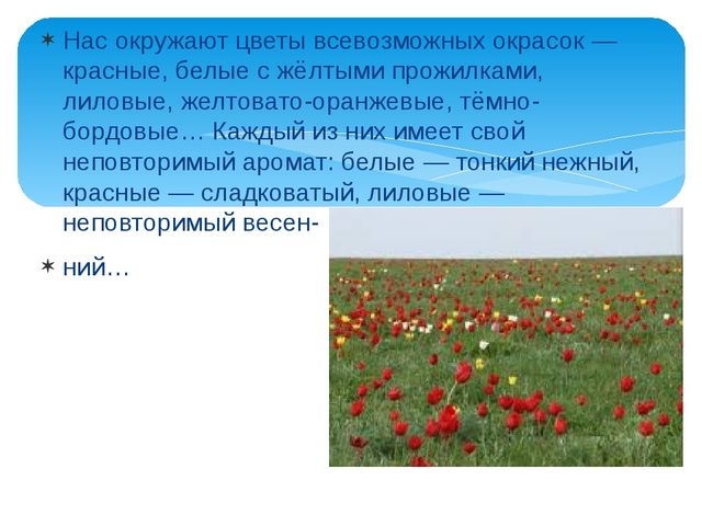 Нас окружают цветы всевозможных окрасок — красные, белые с жёлтыми прожилками...