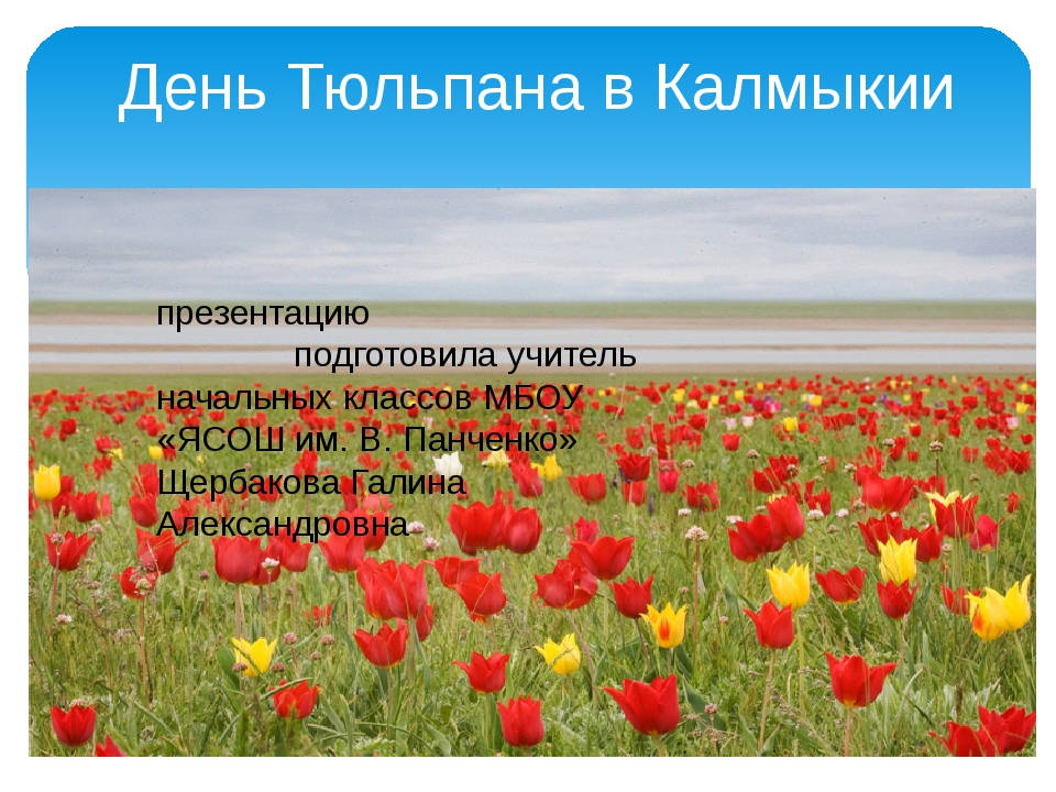 День Тюльпана в Калмыкии презентацию подготовила учитель начальных классов М...