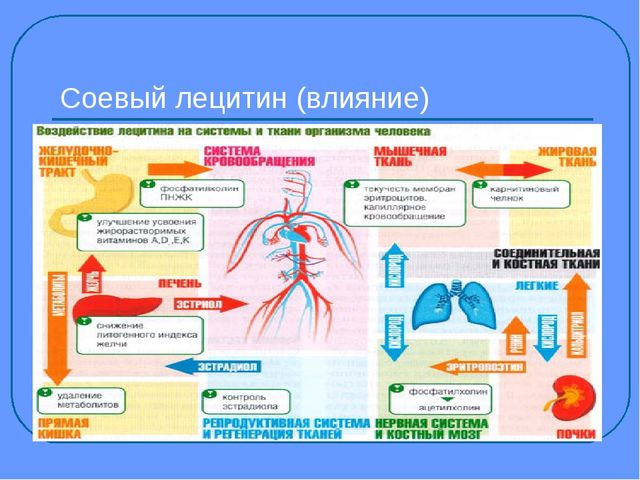 Соевый лецитин (влияние)