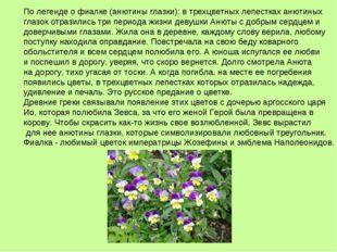 По легенде о фиалке (анютины глазки): в трехцветных лепестках анютиных глазок