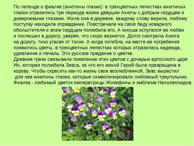 По легенде о фиалке (анютины глазки): в трехцветных лепестках анютиных глазок...