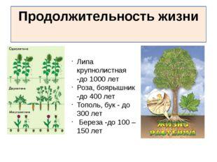 Продолжительность жизни Липа крупнолистная -до 1000 лет Роза, боярышник -до 4