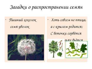 Загадки о распространении семян Пышный хохолок семя уволок Хоть совсем не пти