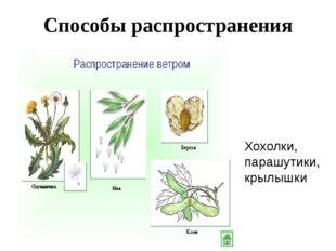 Способы распространения семян Хохолки, парашутики, крылышки