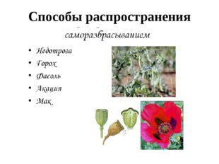 Способы распространения семян