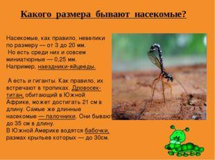 Какого размера бывают насекомые? Насекомые, как правило, невелики по размеру