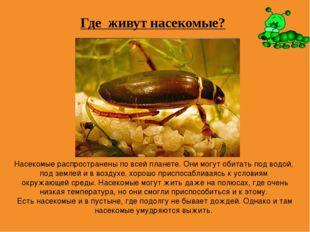Где живут насекомые? Насекомые распространены по всей планете. Они могут обит