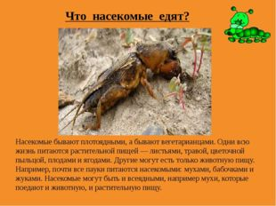 Что насекомые едят? Насекомые бывают плотоядными, а бывают вегетарианцами. Од