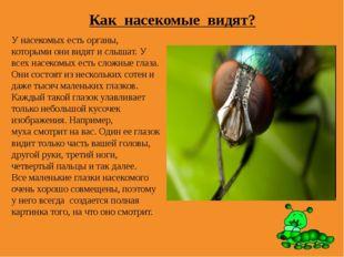 Как насекомые видят? У насекомых есть органы, которыми они видят и слышат. У