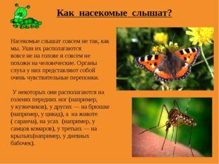 Как насекомые слышат? Насекомые слышат совсем не так, как мы. Уши их располаг