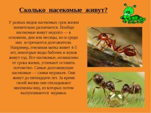 Сколько насекомые живут? У разных видов насекомых срок жизни значительно разл