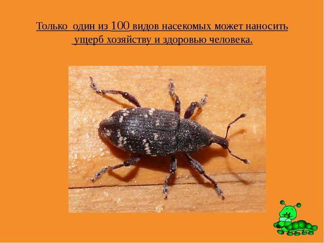 Только один из 100 видов насекомых может наносить ущерб хозяйству и здоровью...